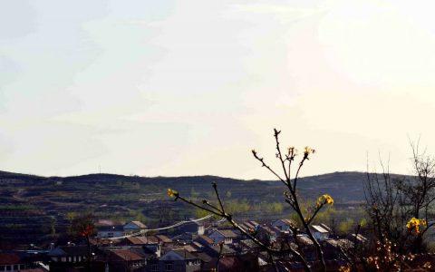 胶东作家姜海波老师作品欣赏:柔柔的乡情
