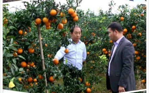 农林卫视《中国农资秀》|金猪迎丰年 农人大联欢 魏柑来了
