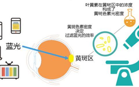 缓解视疲劳用什么最有效?试试新维士越橘叶黄素片