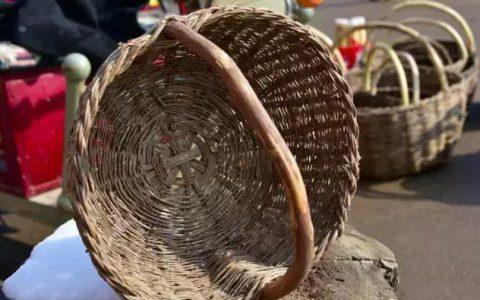 竹子的作用