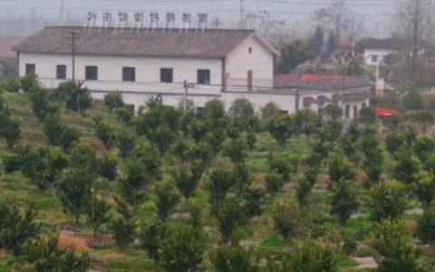 蓬安锦屏西拱桥村脱贫奔康柑桔产业园,一处最靓丽的风景!