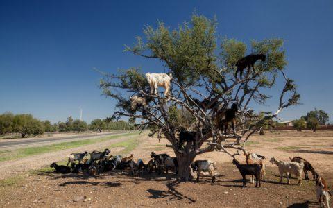 手机下单,活羊送到家,非洲的外卖。