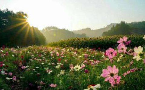 英山四季花海一日游 四季花海赏花 四季都有不同的花