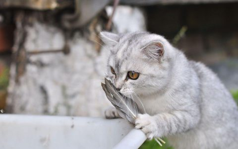 成都宠物火化行业发展前景,宠物殡葬环保无污染是否可行?