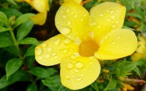 美丽诗篇《人与自然的和谐》作者:唐永革
