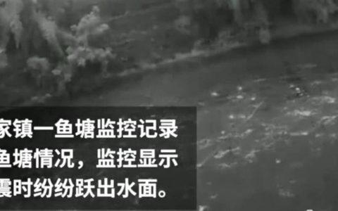 资中闭露电视拍下地震发生前一处鱼塘鱼群突集体跃出水面,似预知地震发生