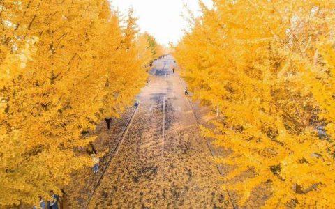 秋游攻略,安徽秋景藏在这10个坐标,一公路一学校一村落绝美安徽