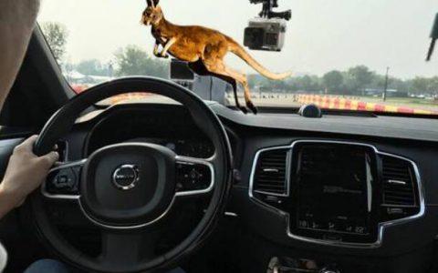 澳大利亚推出AI摄像头,以自动检测驾驶员是否开车时使用手机
