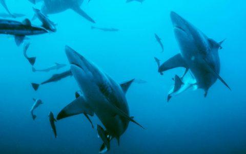 气候变化对海洋的影响,使海洋中的氧气量减少了2%