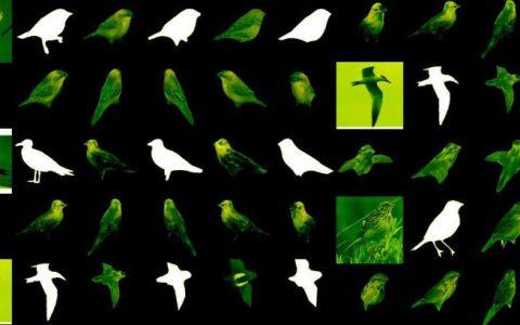 新的AI可以从单个2D图像创建对象的3D模型