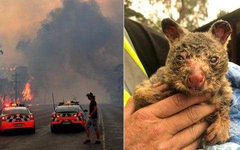 澳洲山火悉尼郊区升至48.9度,邻省三处火头合并变超级大火面积大过曼哈顿区
