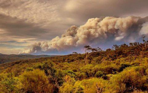 澳大利亚逮捕数十人故意发起丛林大火