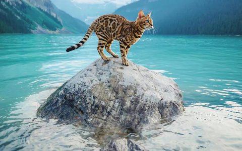 一只豹猫环游世界,奇幻照片圈粉百万