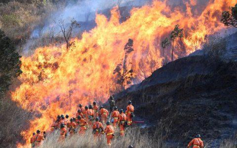 海南森林一名消防员不满工作量大待遇低,八次放火毁林获刑10年半
