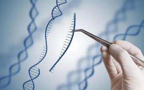 从伦理到治理,基因编辑不该存在侥幸