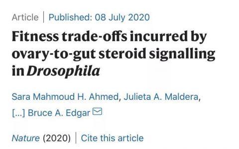 性激素如何调控肠道和肿瘤?