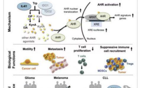 免疫疗法3+1,新靶点阻断为癌症治疗开辟新途径