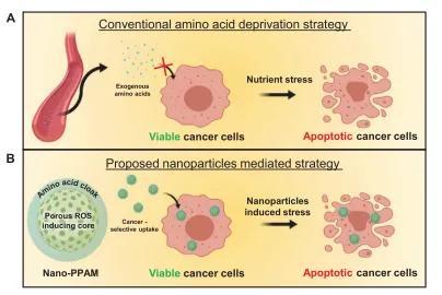 """研究开发""""特洛伊木马"""",以促进癌细胞自毁"""