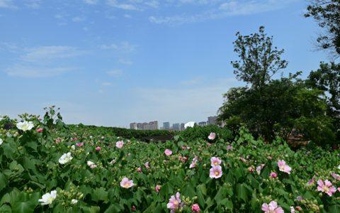 国庆遇到中秋,成都市植物园8大免费活动带你耍翻天