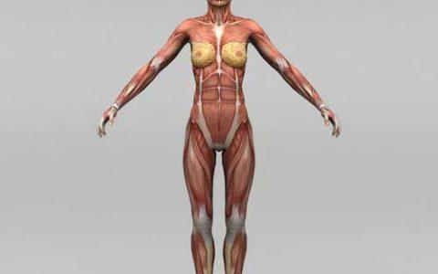 陈根:肌肉细胞重编程,重建受损肌肉