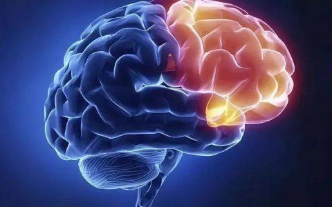 陈根:不要忽略大脑中的噪音