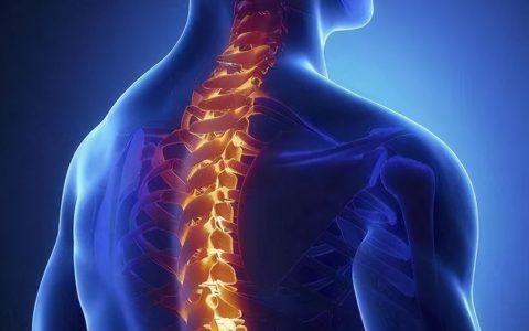 陈根:干细胞治疗脊髓损伤,从不可逆到可逆