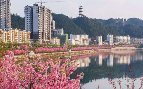 贵州锦屏县三江六岸的樱花开了,游人如织,我们日夜牵挂的家乡,也是别人想着的诗和远方!