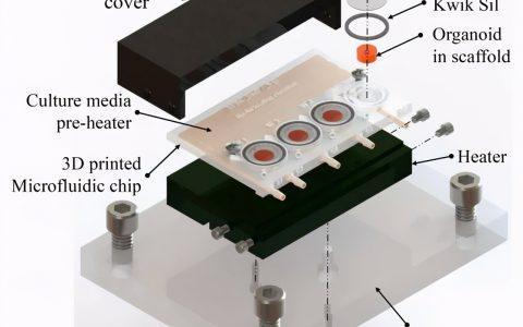 陈根:3D打印生物器,成功跟踪大脑类器官